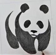 Panda rajz