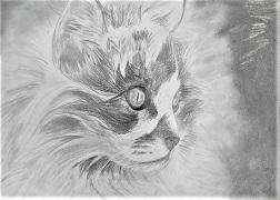 grafit cica