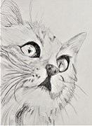 Grafit cica 2